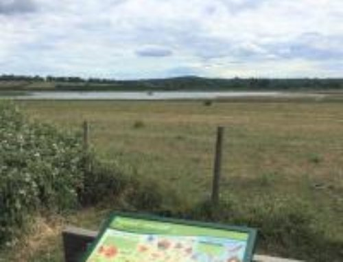 Campaign to save Tice's Meadow